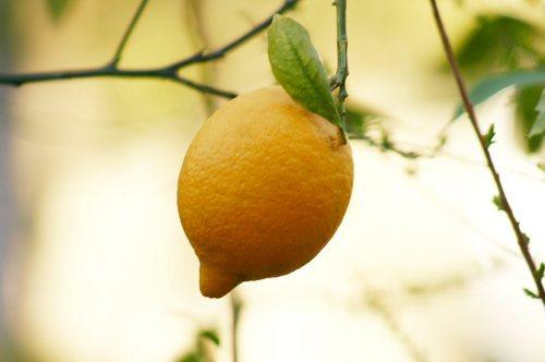 lemon.jpgのサムネイル画像