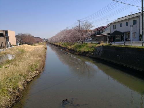 20180325yanagawa.jpg