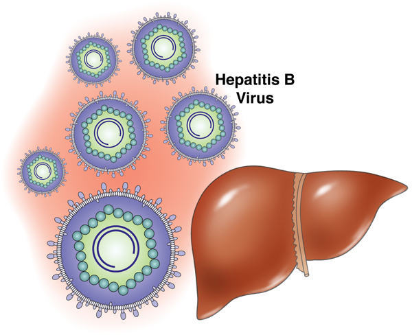 hepatitis_b.jpg